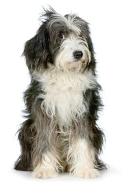 dog boarding grooming
